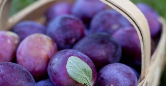 šljive-voće-zdravlje-modnialmanha