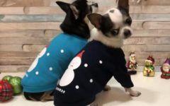 shopping-Double-Trouble-Dog-Boutique-modnialmanah