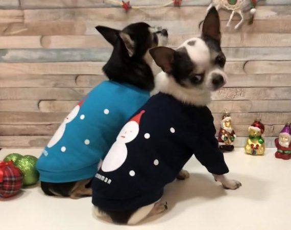 shopping-Double-Trouble-Dog-Boutique-modnialmanah