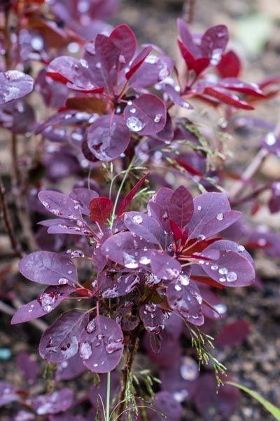 Floraart-modnialmanah-lifestyle
