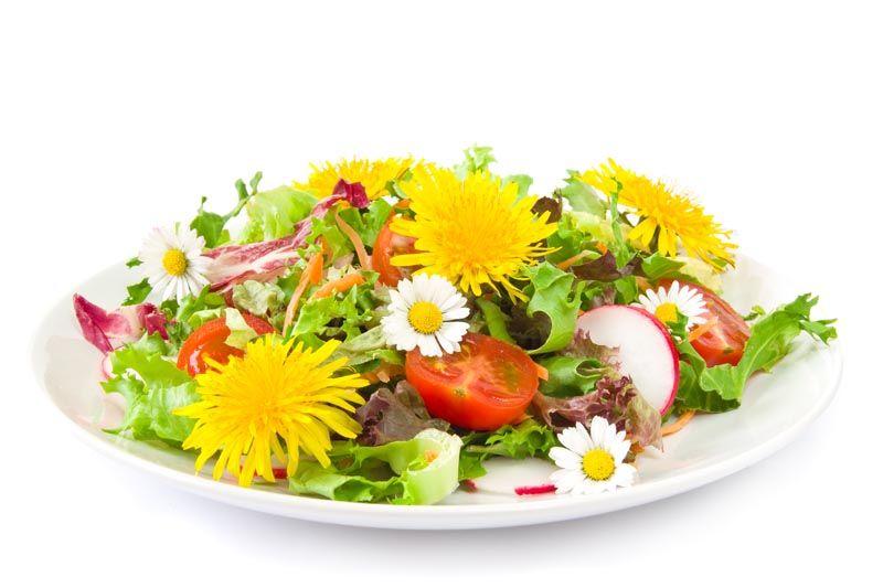 maslačak-zdravlje-zdrava-hrana