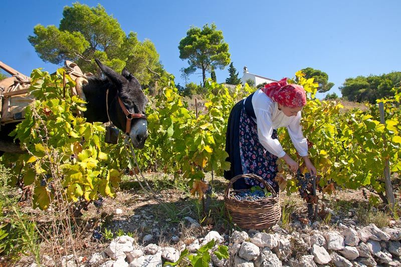 pz-putniković-vino-modnialmanah-gastro