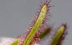 art-park-lifestyle-modnialmanah-biljke