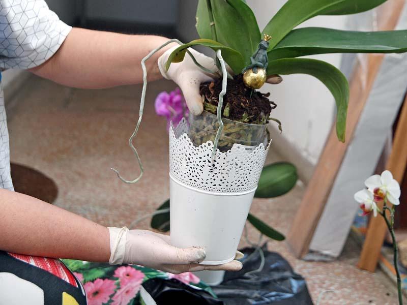 lifestyle-cvijeće-orhideje-modnialmanah-diy-napravi-sam