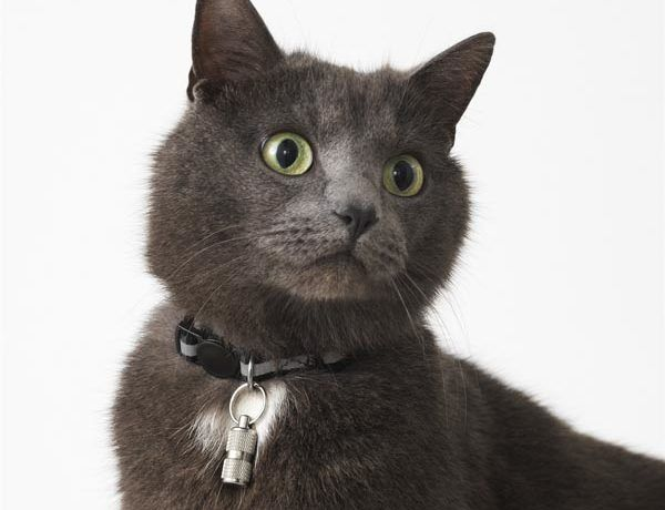 lurvig-ikea-mačka-modnialmanah-lifestyle
