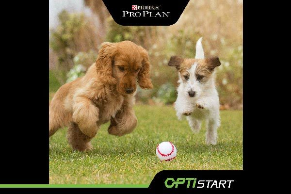 purina-pro-plan-puppy-optistart-hrana-lifestyle-modnialmanah