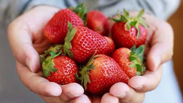 jagode-zdravlje-zdrav-život-modnialmanah