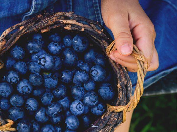borovnice-zdravlje-zdrava-hrana-modnialmanah