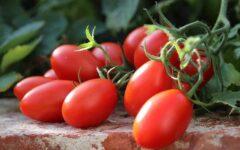 zdravlje-zdrav-život-rajčica-modnialmanha