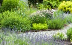 vrt-biljke-zdravlje-zdrav-život-modnialmanah