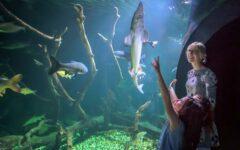 aquatika-tjedan-odmora-vrijedan-modnialmanah-lifestyle