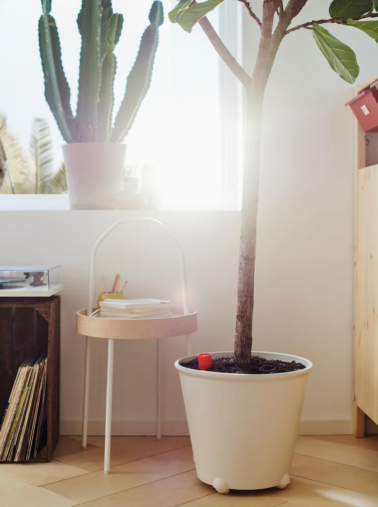ikea-savjeti-biljke-modnialmanah