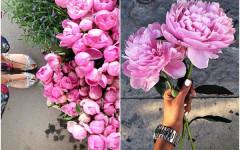 božur-praktični-savjet-majska-ruža-cvijet-modnialmanha