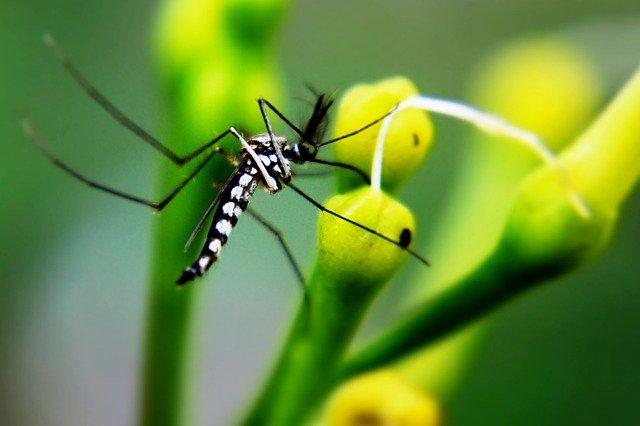 zdravlje-komarac-modnialmanah